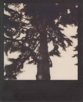The Tree of Destiny