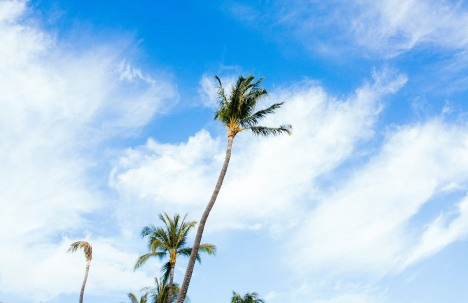 maui_hawaii_palm_tree_sky